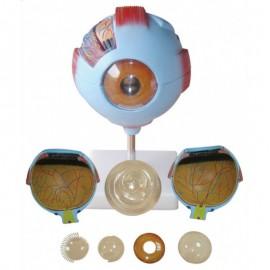 szkolny, duży model anatomiczny oka