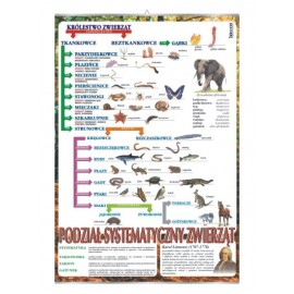 Systematyka królestwa zwierząt - plansza dydaktyczna