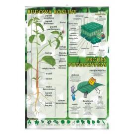 Budowa rośliny - fotosynteza - plansza dydaktyczna