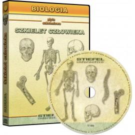 Szkielet człowieka (układ kostny) - program multimedialny